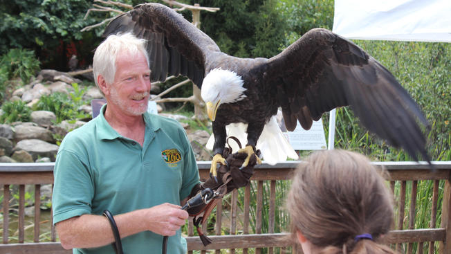 Elmwood+Park+Zoo+Dave+Wood+Bald+Eagle.jpg